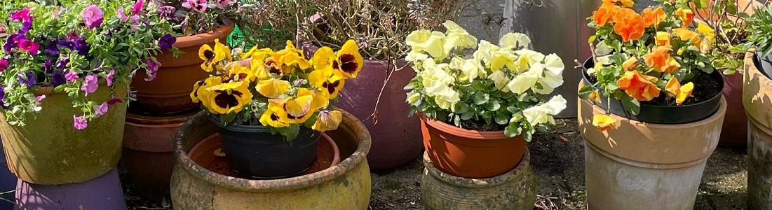 Tuinvereniging De Fenix